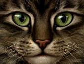 Catman4